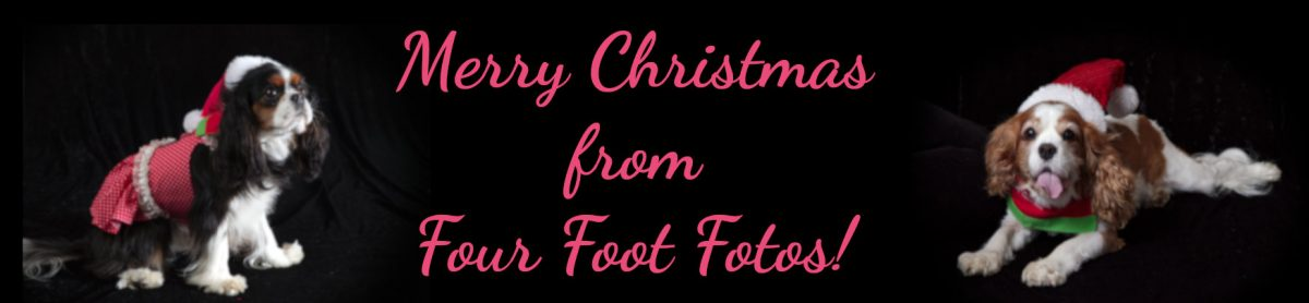 Merry Christmas from Four Foot Fotos