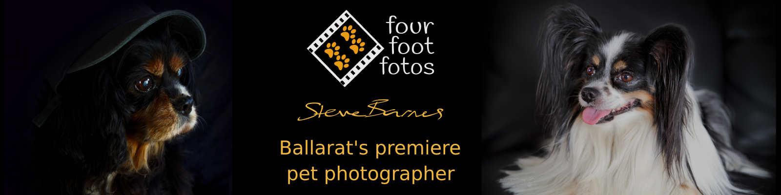 Four Foot Fotos - Ballarat's Premiere Dog Photographer