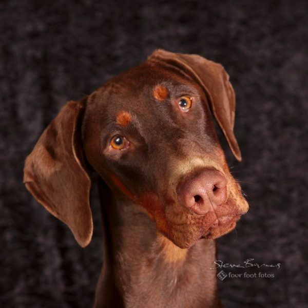 Canine Serious! dog photography package by Four Foot Fotos, Ballarat