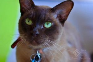 Green Eyes portrait by Four Foot Fotos, Ballarat