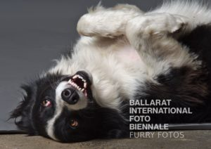 FURRY FOTOS @ Bridge Mall with Donald thew Collie