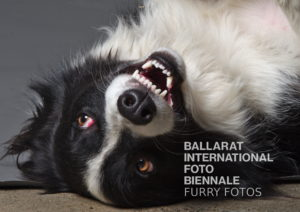 FURRY FOTOS @ Bridge Mall with Donald the Collie
